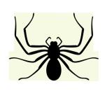 Spider Extermination - Suffolk, VA - Tidewater Pest Control